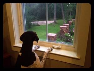 Geli looking outside